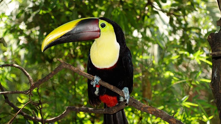 farbenfroher vogel